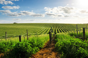 wine_country