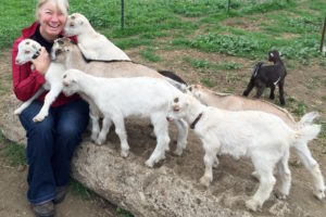 Stepladder Creamery Goat Cheese Tour