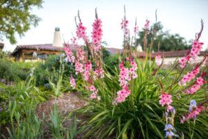 Grounds - Gardens below Hacienda